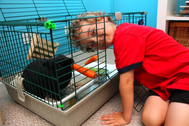 Ollie in cage